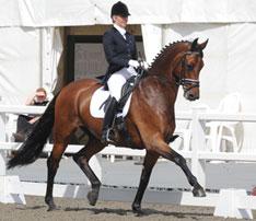 Arley Moss Equestrian Training
