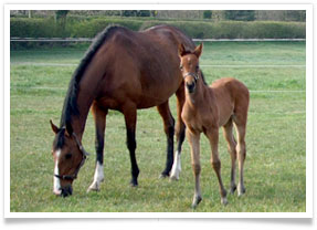 Grass Livery foal