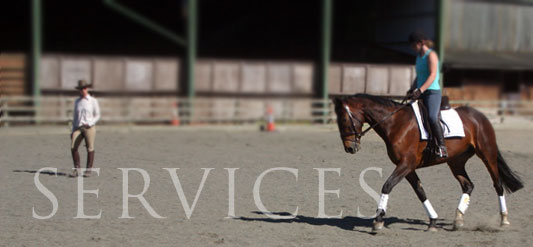 Arley Moss Equestrian Services
